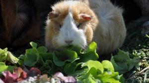 """Salatdressing """"a la Lilli"""" – so was von lecker!"""