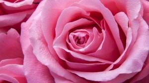 Rosenzäpfchen für die Yoni